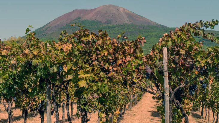 images/tours/cities/cantinedelvesuvio.jpg